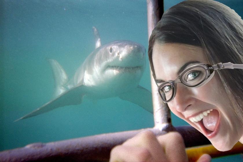 Shark Dive blog